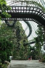Photo: Visite de la Rain forest