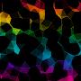 Prism Live Wallpaper временно бесплатно