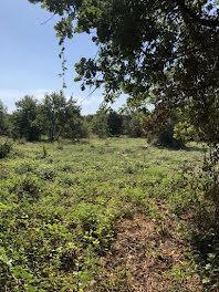 terrain à Rochefort-du-Gard (30)
