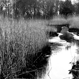 The Marsh by Leah Zisserson - Landscapes Waterscapes ( rhode island, reeds, black and white, salt water, marsh )