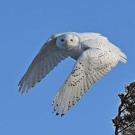 by Steven Liffmann - Animals Birds