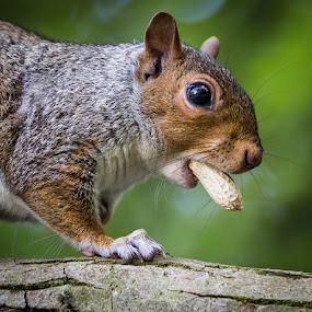 by Dave Hudson - Animals Other Mammals (  )