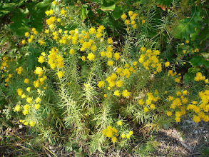 Photo: Őszi virágok