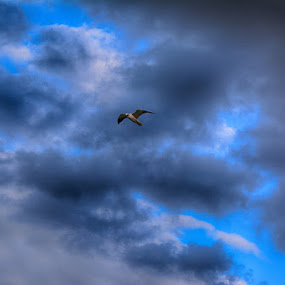 by Kareem Mohamed - Animals Birds ( sky, freedom, blue, bird, birds )