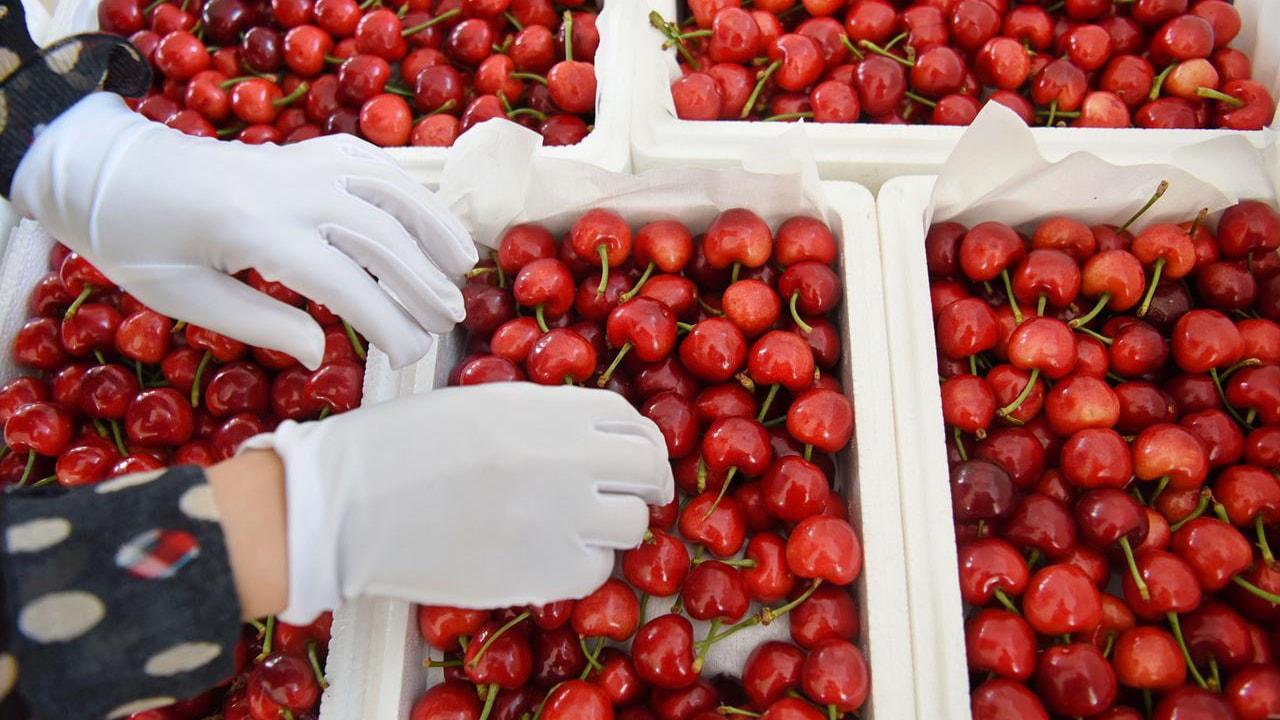 Giá Cherry Mỹ Trên Thị Trường Hiện Nay Như Thế Nào ?