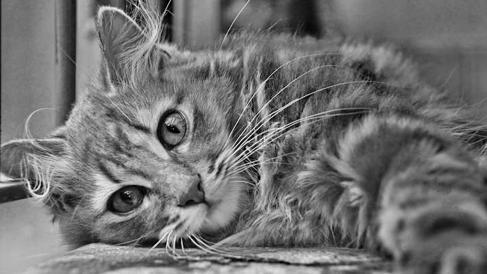 A cat di -Os-
