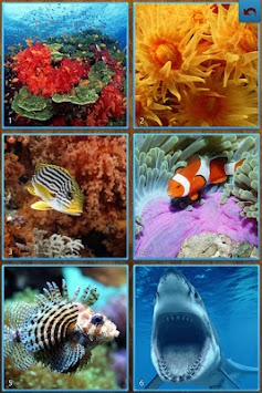 Sea Life Jigsaw Puzzles APK Latest Version Download - Free
