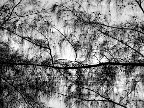 Photo: These pine branches were just off the beach near Freeport in the Bahamas. The light was really harsh, and even though the glare in the water is a little clipped towards the center, I still like it. It's probably not a shot I'm going to print and hang on the wall, but it's interesting enough to keep around.