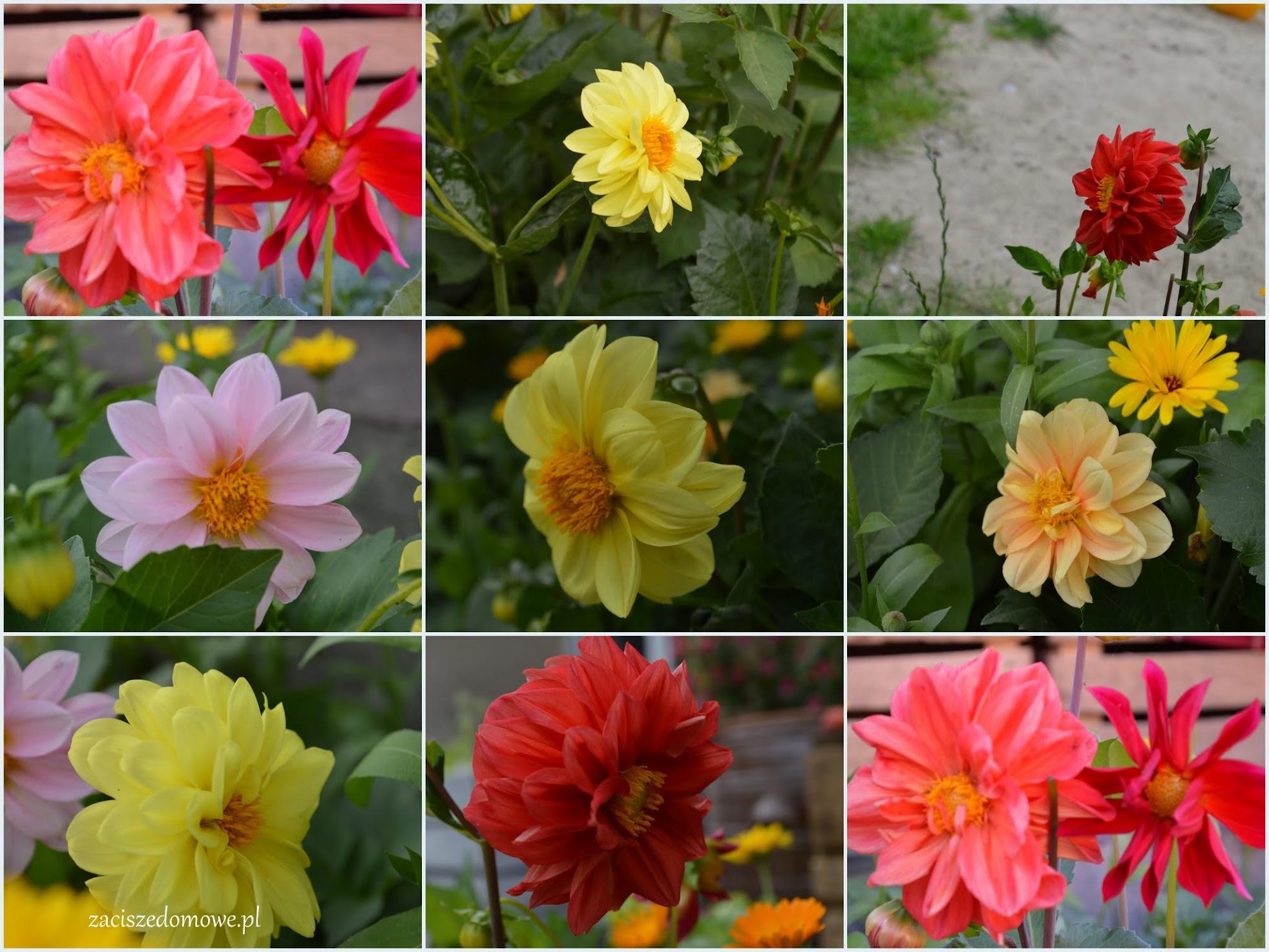o ogrodzie i wdzięczności