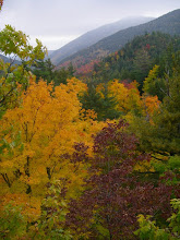 Photo: Colorful foliage.