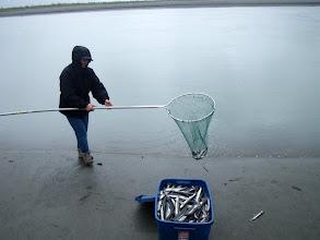 Photo: Daldır kepçeyi, al balıkları. 20 dakikada doldu kutu.