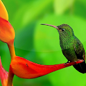 Birds Live Wallpaper 🐦 Beautiful Pictures icon