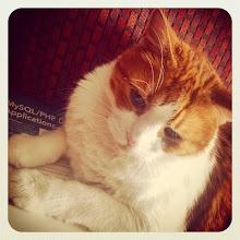 Photo: Mr. Tom paw resting position #intercer #cat #cats #pet #pets #canada #petsofinstagram #catsofinstagram #paws #orange #white #funny #beautiful #eyes #book - via Instagram, http://ift.tt/1oqs5Ld