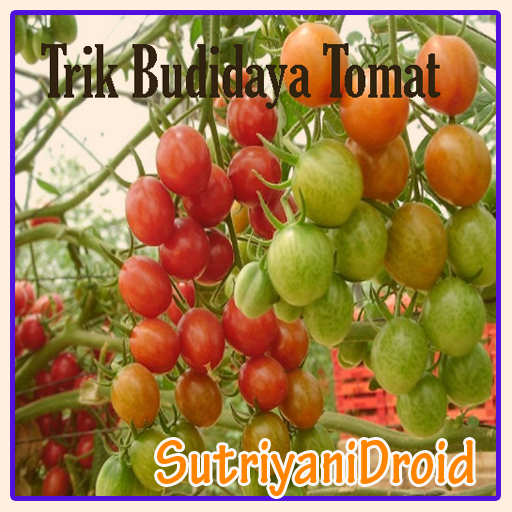 Tricks Tomato Cultivation - Apps on Google Play
