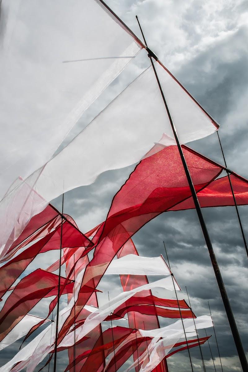 ...Flags.. di Alessandro Alessandri