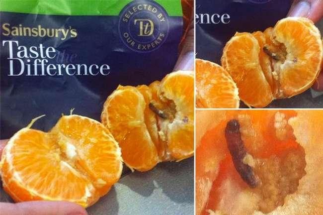 25 Bizarre Things Found in Food Packaging