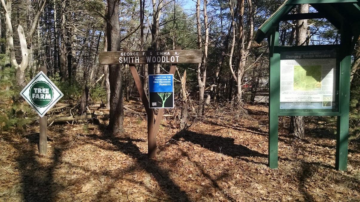 Smith Woodlot Trails - Newfields, NH