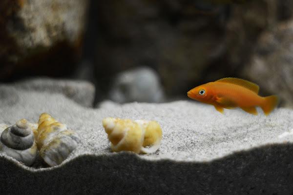 Leleupi orange di DoppiaS