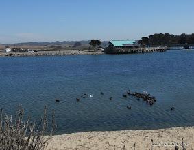 Photo: Sea Otters at Moss Landing.