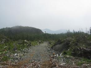 Photo: Logging road on Seddall Island