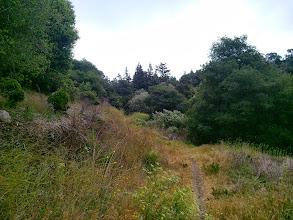 Photo: See the redwood crowns peeking above the treeline