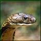 SARP (Snake Awareness & Rescue Protocol) APK