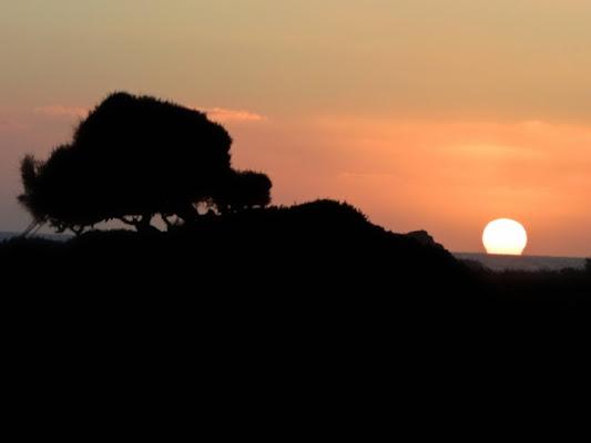 Un albero al tramonto di mauro56