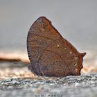 Dark Evening Brown