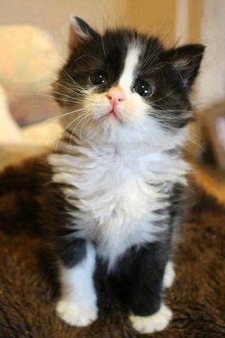 Kittens 4