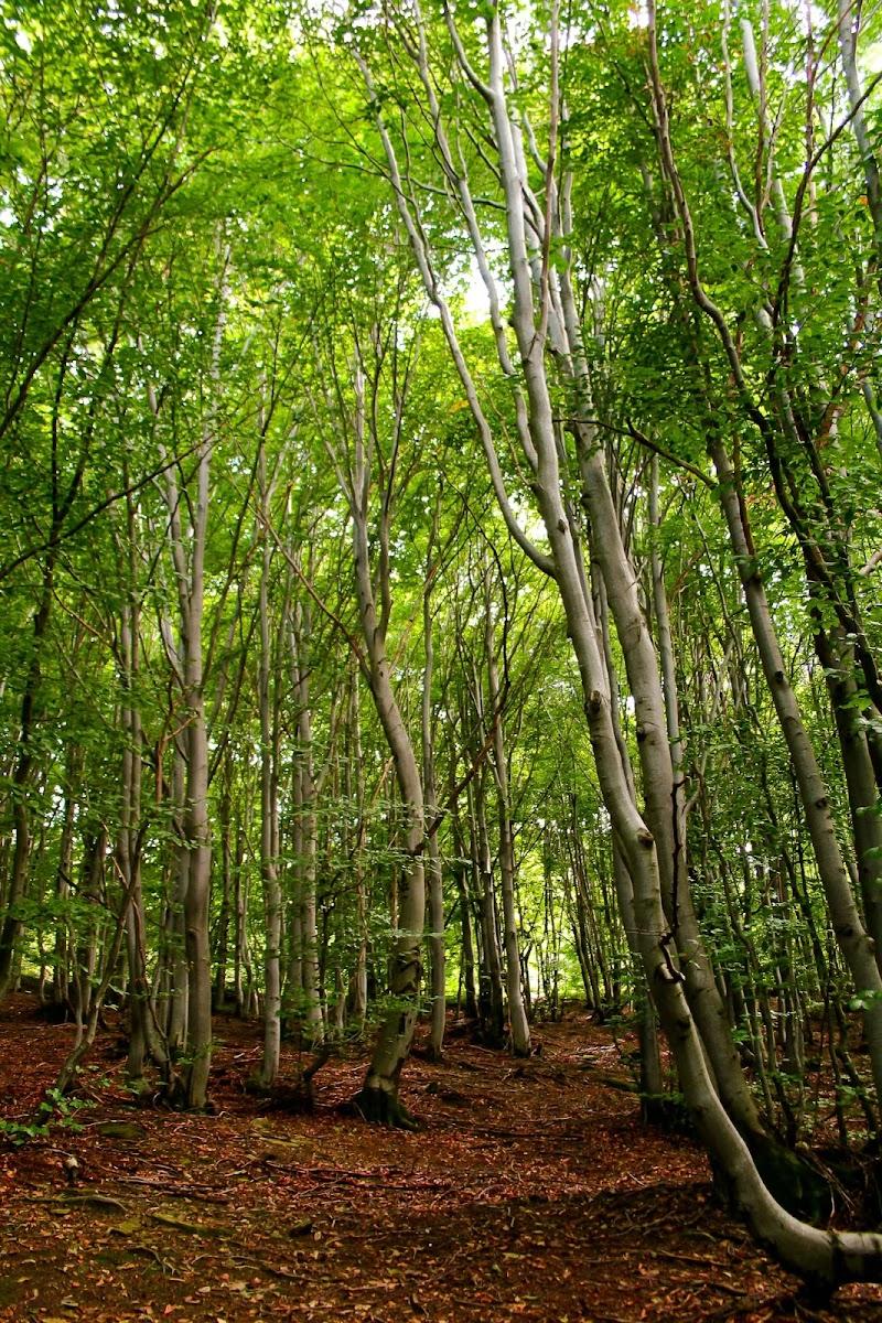 ash trees di Mario Quaglia