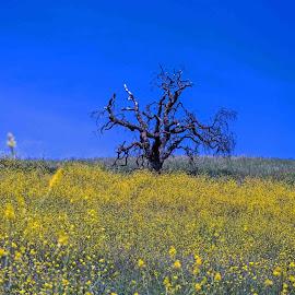 Alone In The Meadow by Will McNamee - Landscapes Prairies, Meadows & Fields ( mcnamee2169@yahoo.com, dld3us@aol.com, gigart@aol.com, danielmcnamee@comcast.net, ronmead179@comcast.net, aundiram@msn.com,  )