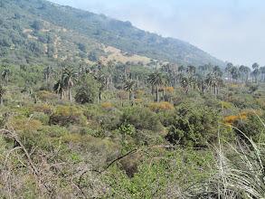 """Photo: Sector """"Las Palmas de Ocoa"""" Parque Natural La Campana"""
