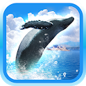 REAL WHALES Find the cetacean! icon