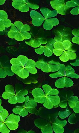 Lwp 緑葉