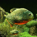 3D Fish Aquarium Wallpaper HD icon