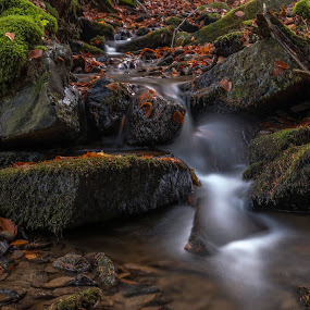 Autumn stream by Martin Namesny - Nature Up Close Water ( water, stream, autumn, mysterious, moss, colored, leaves, stones )
