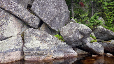 Photo: Polypody ferns on little ledges.