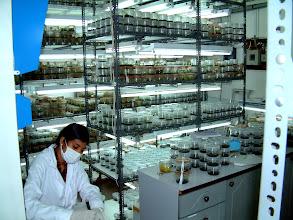 Photo: Colombo, Zellkultur Labor / Tissue culture lab. Foto: R. Cantley.
