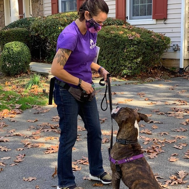Private dog training in Westchester County, NY