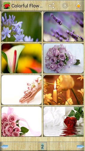 Colorful Flower Images
