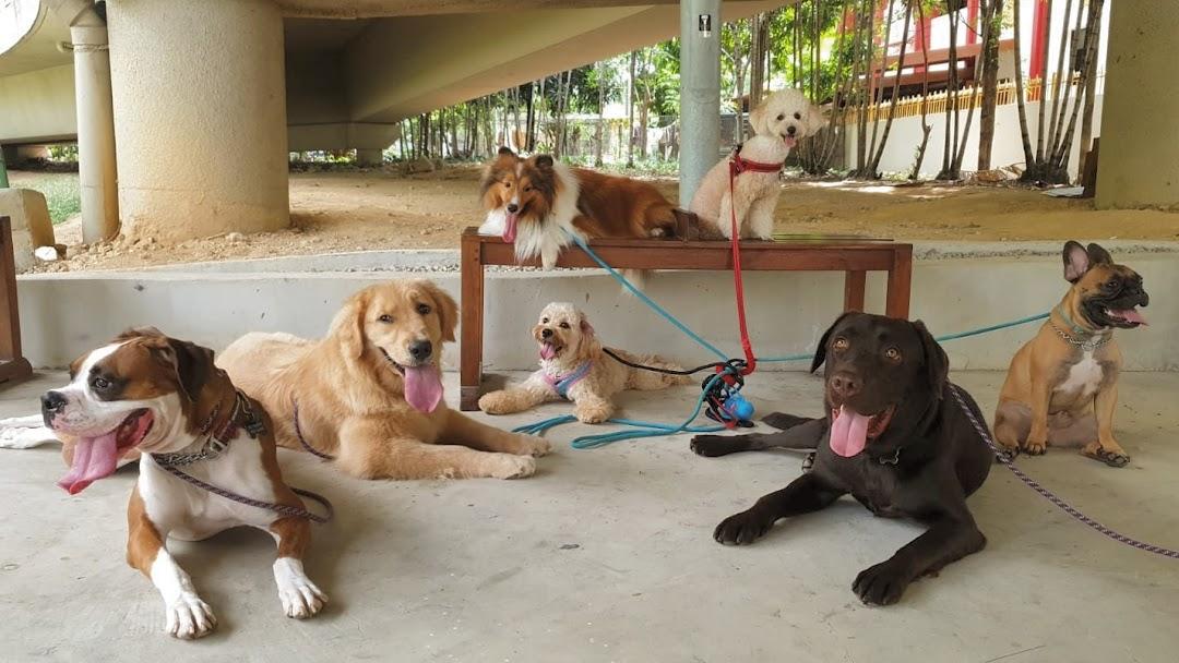 Image result for Dog Daycare Service