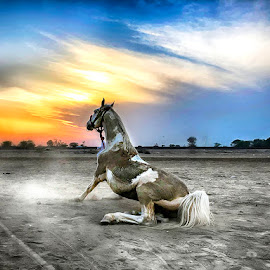 by Abdul Rehman - Animals Horses