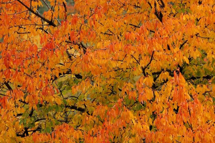 Autunno arancio di Federico Faletto