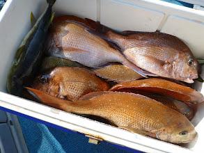 Photo: 釣果です。 カワサキさんのクーラーBOX 前回の半分、真鯛10匹の釣果でした。
