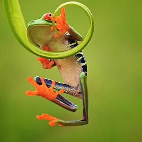 climbing by Shikhei Goh II - Animals Amphibians