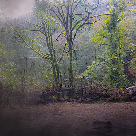 by Fereshteh Molavi - Landscapes Forests