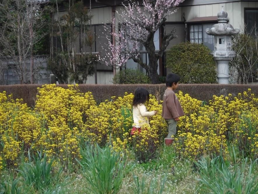 菜の花を楽しむ二人