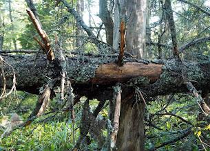 Photo: Vanha metsäkin oli kuvauksellinen