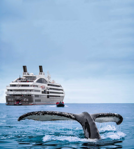 Ponant-Antarctica-whale.jpg - See whales close up on your Ponant cruise to Antarctica.