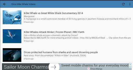 Killer Whale Orca Videos